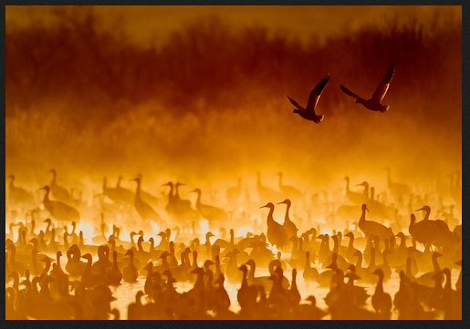 """Cranes in the Fire Mist"" is one of Scott Bourne"